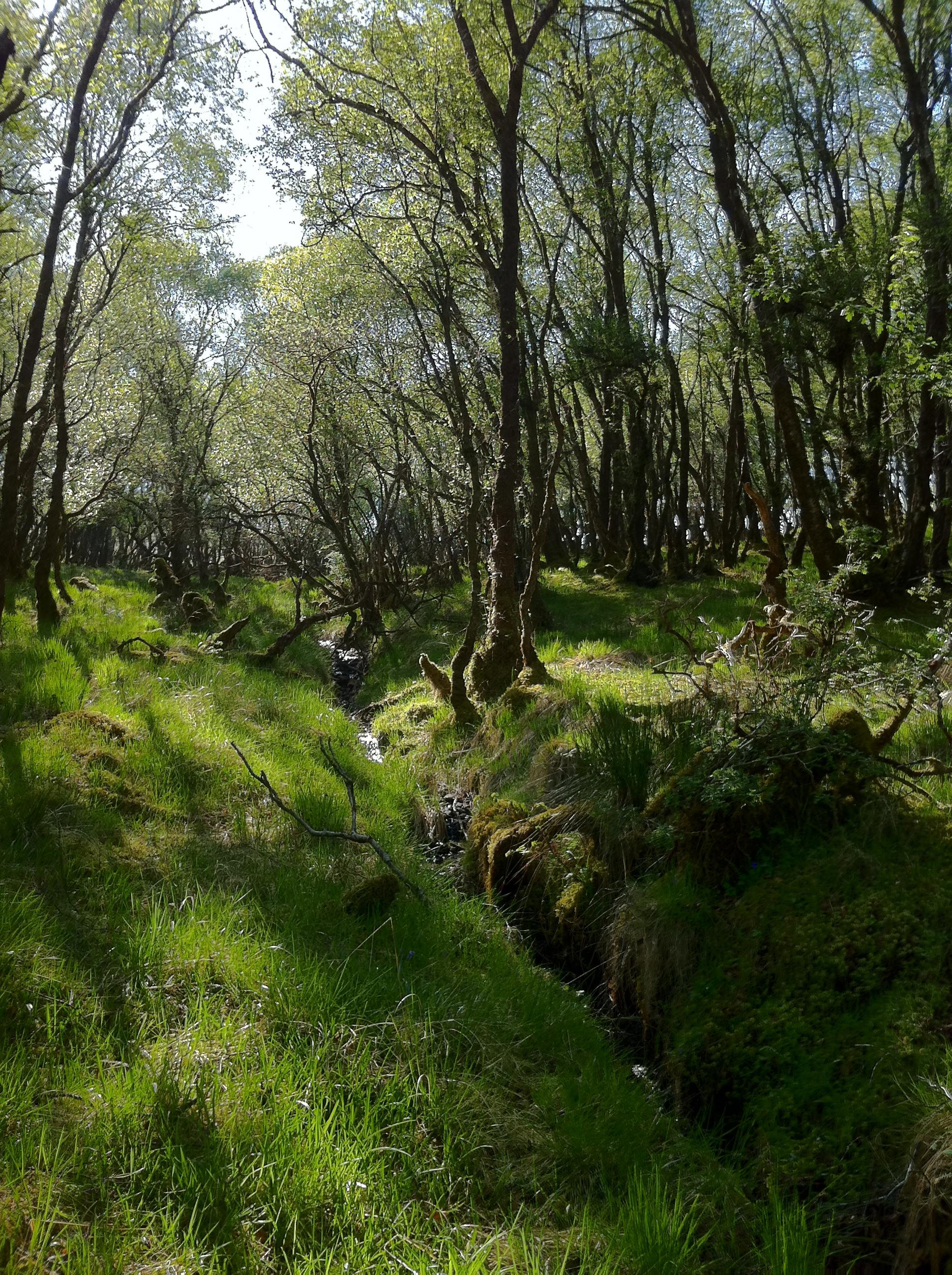 Oribe landscape, Isle of Skye